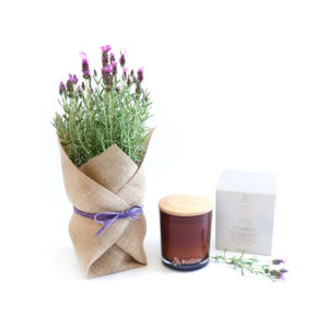 Lavender Living Gift Plant Set Sydney Delivered