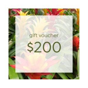 Online Gift Plants Gift Voucher 200 Syngoniumt Plants Gift Voucher 200 Syngonium