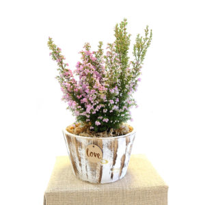 Potted Colour Ericaflora Wooden Planter