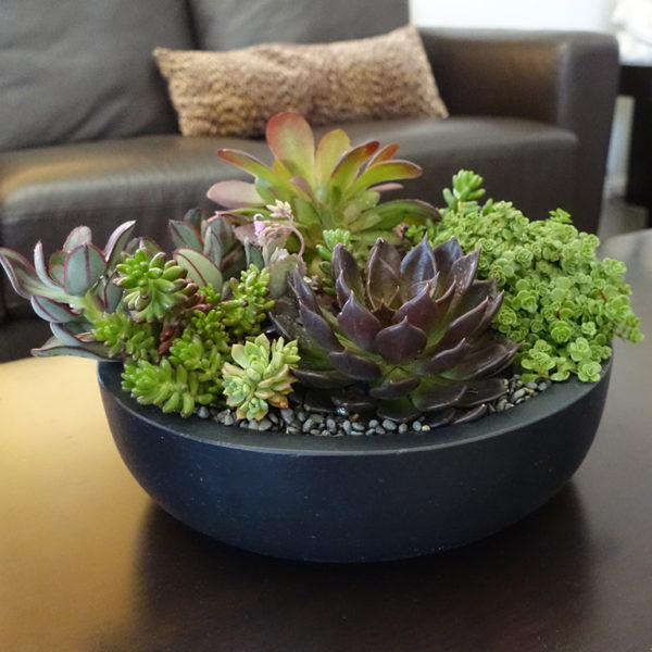 Succulent Bowl Arrangement Sydney Delivery