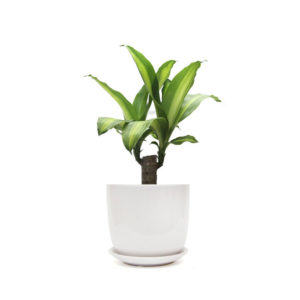 Happy Plant White Ceramic