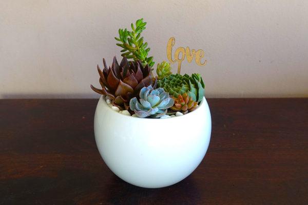 Succulent Bowl Gift Centrepiece Event