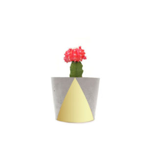 Cactus Red Gold Concrete