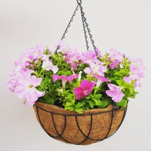 colour hanging basket