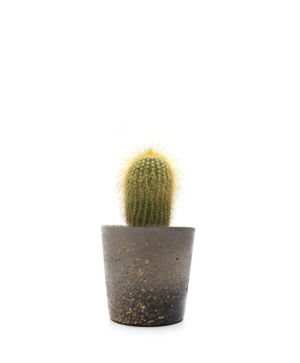 Black and Gold Cactus Mini Pot5