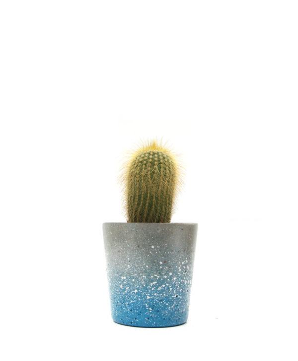 Blue Cactus Mini Pot