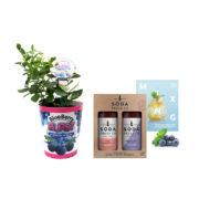 Blueberry Burst Gift Set