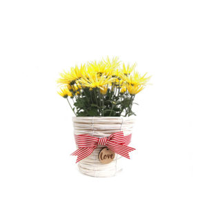 Chrysanthemum Yellow White Wicker love