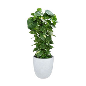 Devils Ivy Totem Pole Egg Planter Light Grey