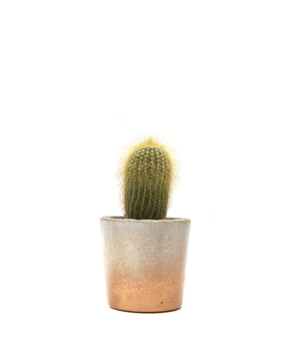 Gold Cactus Mini Pot