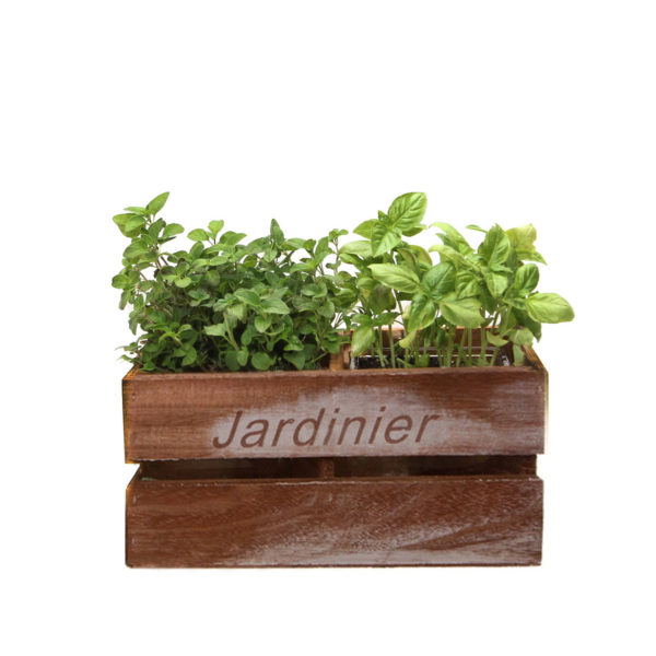 Herb duo in timber planter