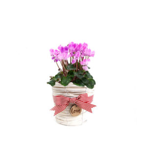 Pink Cyclamen Wicker love