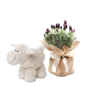 Sheep baby gift lavender