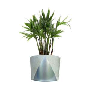 silver concrete palm