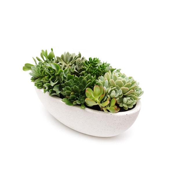 Succulent Boat Bowl Terrazzo Gift Plant