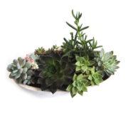 Succulent Bowl Boat Terrazzo