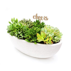 Succulent Bowl Boat White Cheers Succulent Arrangement
