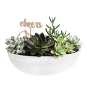 succulent bowl boat cheers