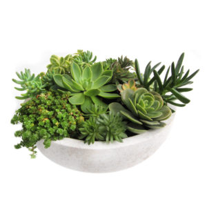 succulent bowl large buy gift