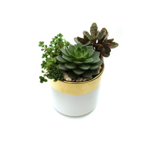 Succulent Bowl Metallic Buy