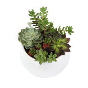 succulent bowl small arrangement buy gift