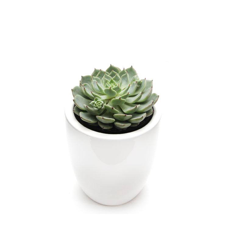 Christmas Plant Gifts