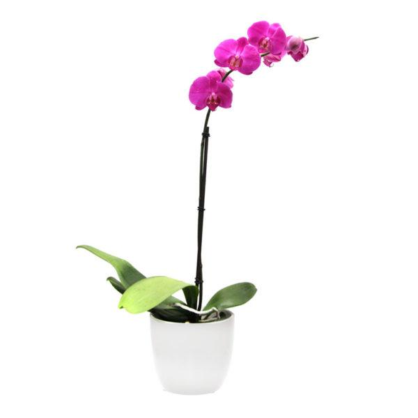 pink orchid ceramic pot