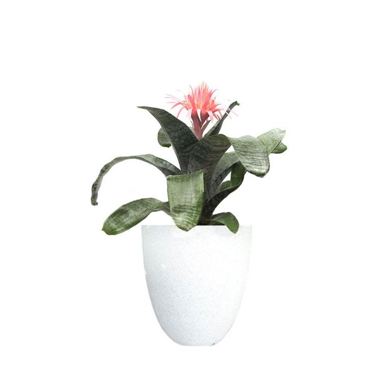 Bromeliad aechmea primera pink in terrazzo pot living gift 25cm bromeliad pink terrazzo white mightylinksfo