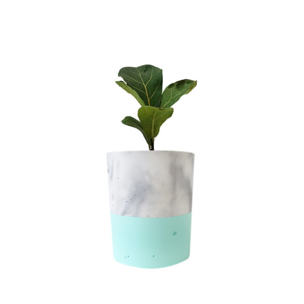 Fiddle Leaf Fig Ficus Lyrata Concrete Pot Marble Mint Green