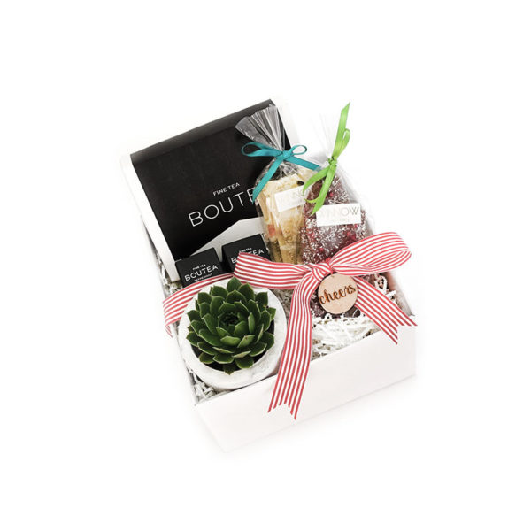 Succulent Living Gift Set Plants Gift Cheers