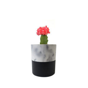 Cactus Red Concrete Marble Black Sydney Gift Plants