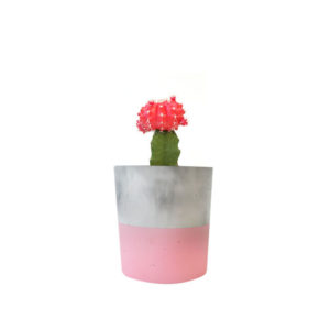 Cactus Red Concrete Marble Pink Sydney Gift Plants