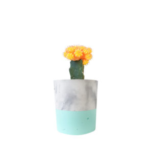 Cactus Yellow Concrete Marble Mint Green Sydney Gift Plants