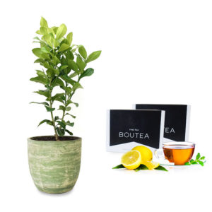 Lemon Tree Pot Gift Tea Pack