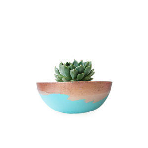 Succulent Bowl Blue Gold Succulent Gift Plant Sydney Delivered