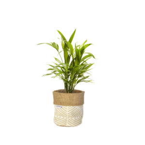 Parlour Palm Planter Bag