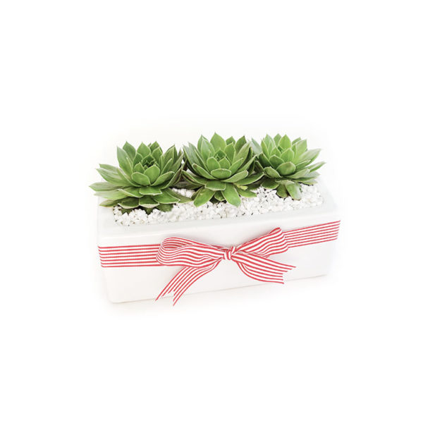 Succulent Trio Planter christmas gift plant
