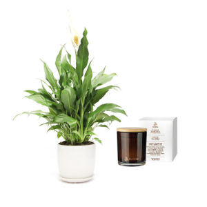 Peace Lily Soy Candle Living Gift Set