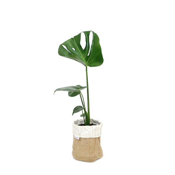 Monstera Deliciosa Planter Bag Hessian