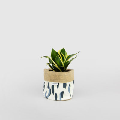 Mother in Law's Tongue Golden Hahnii Planter Bag Blue
