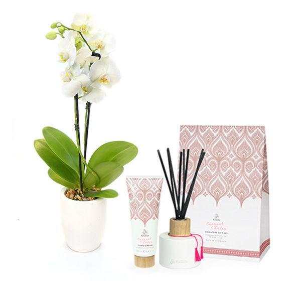 Orchid Phalaenopsis White 100mm Gift Set