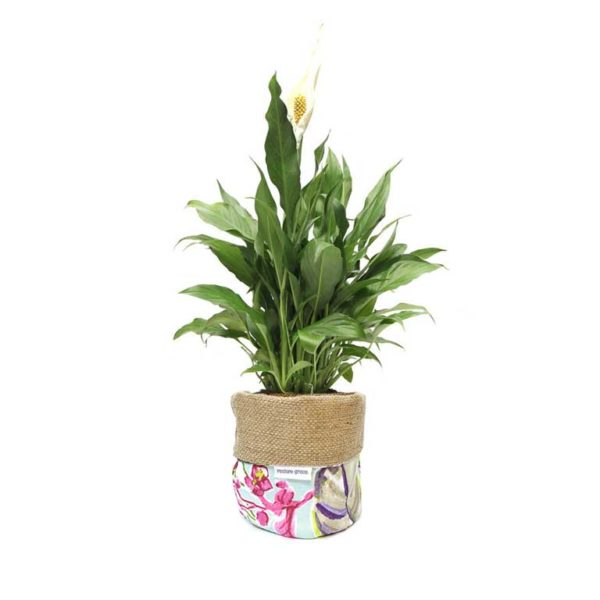 Peace Lily Mothers Day Planter Bag