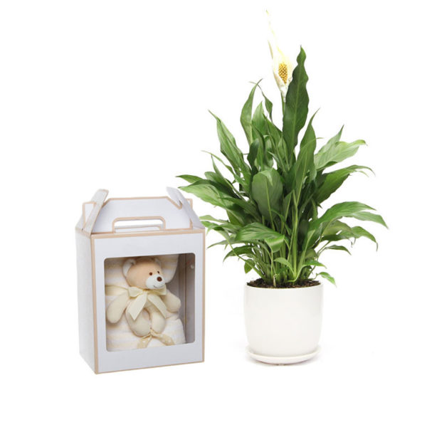 Peace Lily Gift Set Baby set
