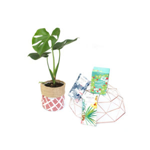 Monstera Living Gift Plant Set Sydney