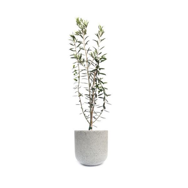 Olive Tree Terrazzo Egg Grey