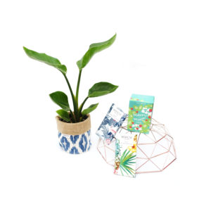 Bird of Paradise Plant Living Gift Set