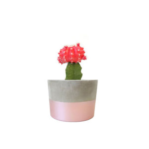 Grafted Cactus Rose Gold Concrete Pot