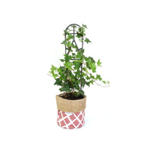 Hedera Ivy Planter Bag Red