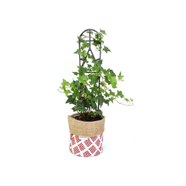Hedera Ivy Planter Bag Red