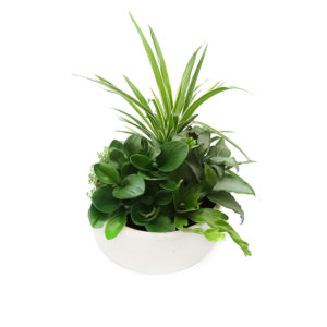 Medium Indoor Plant Bowl